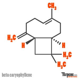 Beta Caryophyllene Molecule