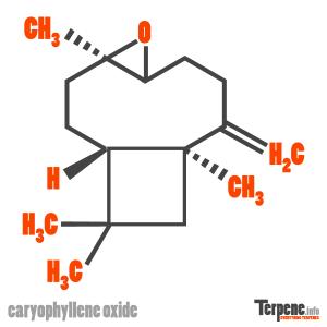 Caryophyllene Oxide Molecule