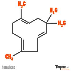 Humulene Molecule