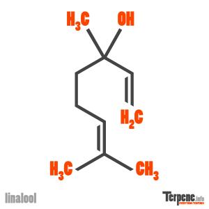 Linalool Molecule