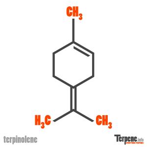 Terpinolene Molecule