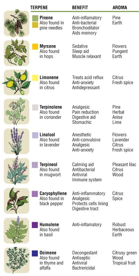 terpenes-info-common-terpenes